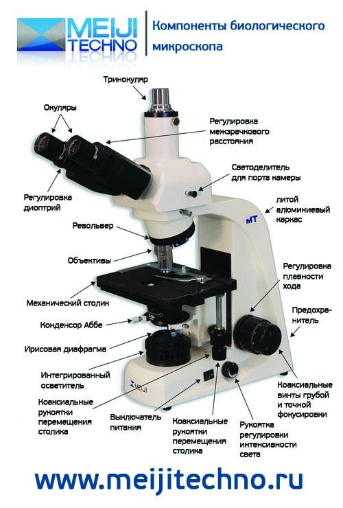 Компоненты биологического микроскопа